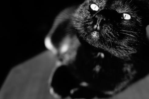 Blog sobre gatos- cuentos de terror sobre gatos
